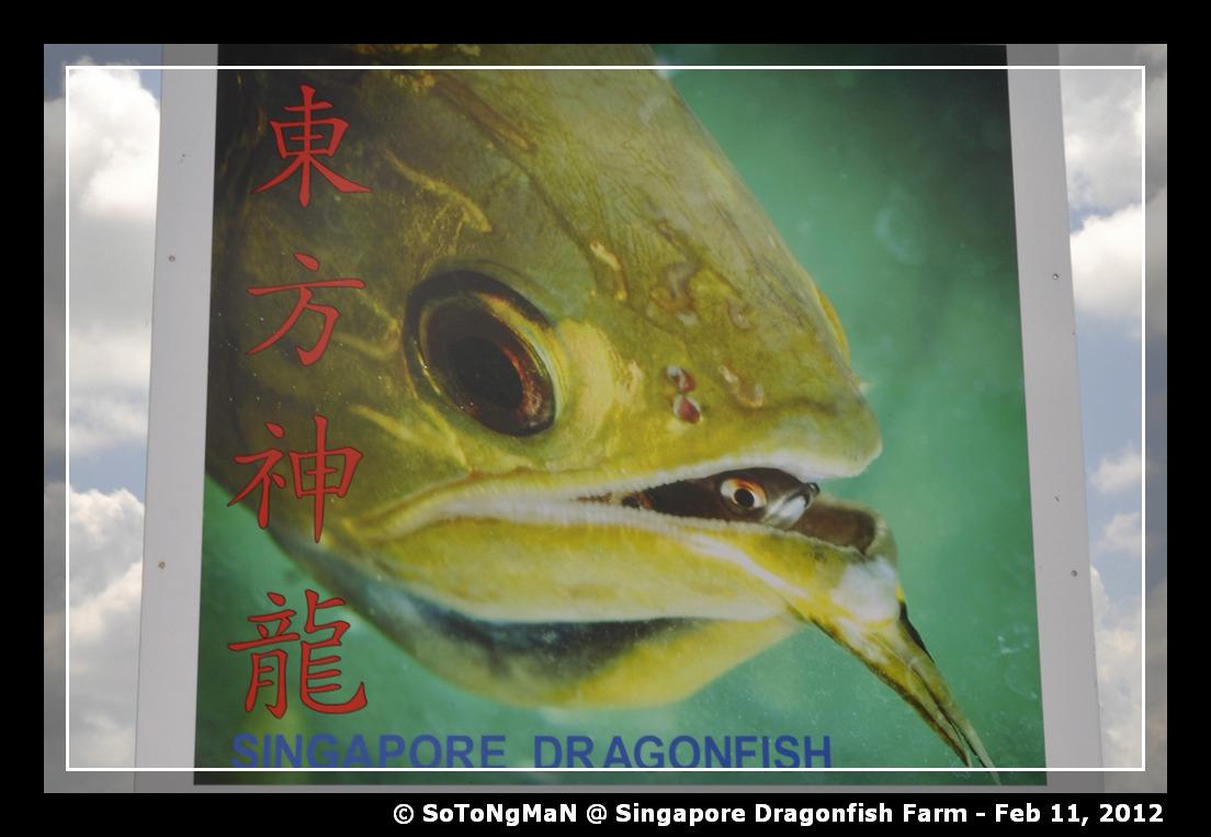 Dragon Fish At Walmart...
